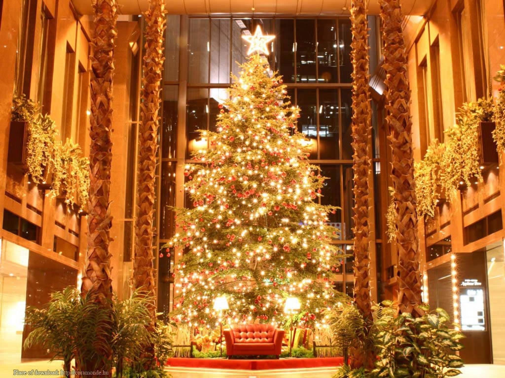 elka.  Новый год в гостинице Нижнего Новгорода.  Новогодние елки в Нижнем Новгороде.