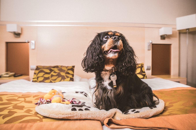 Hotel Sopron - Kutyabarát szolgáltatások