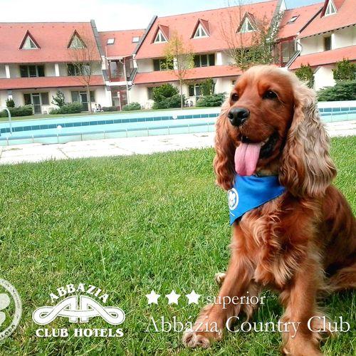 Abbázia Country Club Nemesnép