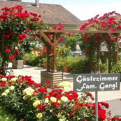 Gästehaus Kristall-Fam Gangl Bad Radkersburg