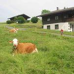 Ferienhäuser Wurian Hermagor-Pressegger See