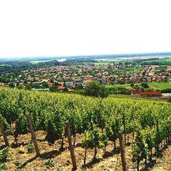3 nap / 2 éj Boros élmények Tokajban, 2 fő részére, reggelivel, egy alkalommal gyertyafényes borvacsorával, sétahajózással, masszázs kedvezménnyel