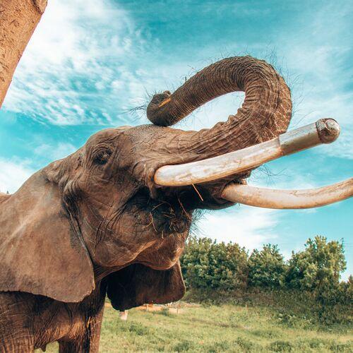 Kimba Elefántpark | Töltéstava