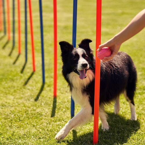 Hard Dog Race Base   Vácduka