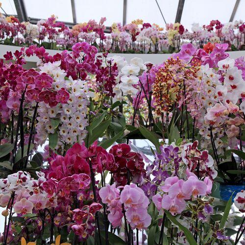 Virágfesztivál és Keceli Országos Fazekas Kiállítás | Kecel