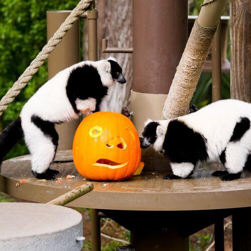Halloween a Kimba Elefántparkban | Töltéstava