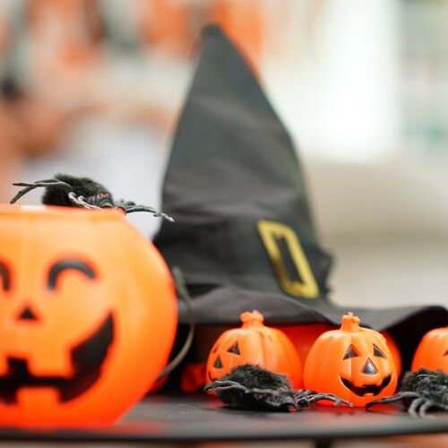Halloween a Győri Állatkertben | Győr