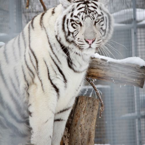 Pécsi Állatkert