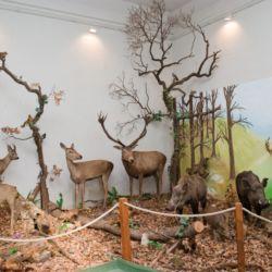 Természettörténeti Múzeum