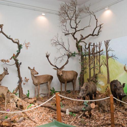 Természettörténeti Múzeum | Pécs