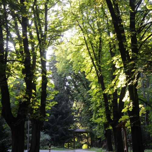 Soproni Botanikus Kert | Sopron