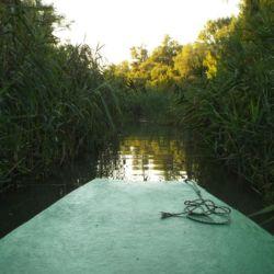 Motorcsónakos ökotúrák a Tisza-tó madárvilágában | Tiszafüred
