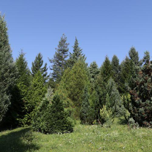 Avasi Arborétum | Miskolc