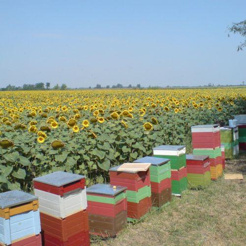 Barkóczi Méhészet