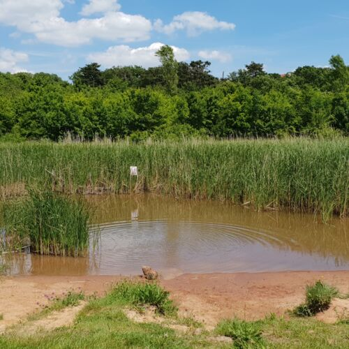 Köcsi tó tanösvény | Balatonalmádi