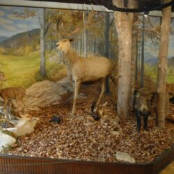 Zilahy Aladár Erdészeti Múzeum | Szilvásvárad