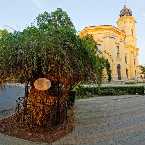 Líciumfa | Debrecen