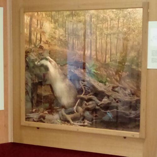 Vadászati Kiállítás | Telkibánya