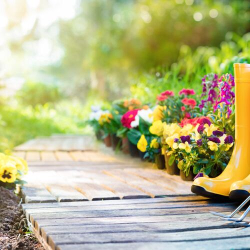 XI. Kertészeti Szakmai napok | Balatonalmádi