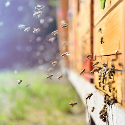 XXXII. Országos Méhésztalálkozó és Vásár   Székesfehérvár