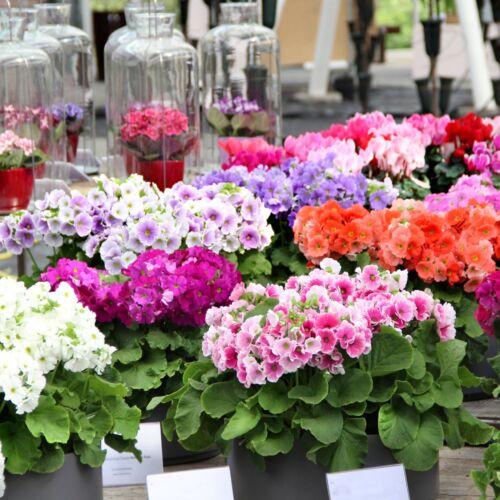 Virág- és dísznövénykertészeti kiállítás- és vásár | Szombathely