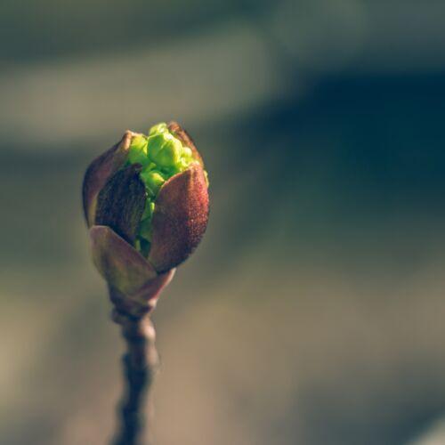 Rügyfakadás – Tavaszünnep | Gyenesdiás