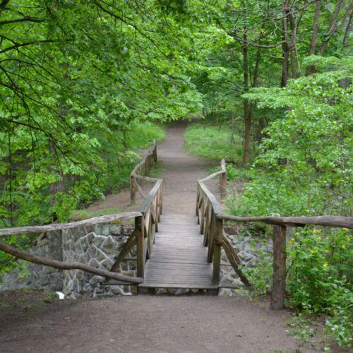 Gödöllői Erdészeti Arborétum | Gödöllő