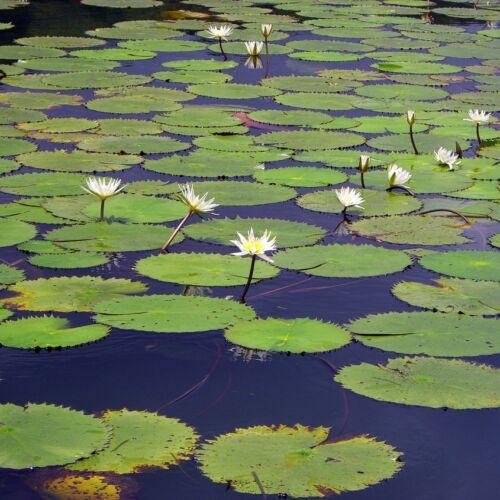 Péteri-tó   Pálmonostora