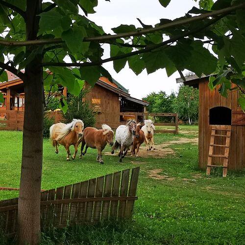 Minifarm | Veresegyház
