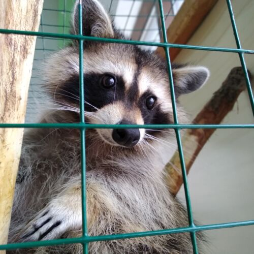 Szigethalmi vadaspark és állatsimogató | Szigethalom