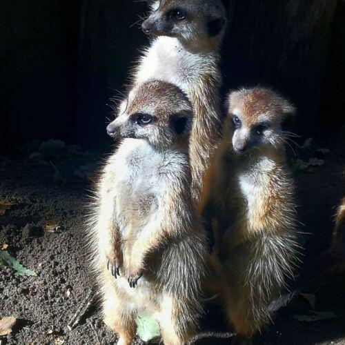 Törökmezői Kis-Állatpark | Nagymaros