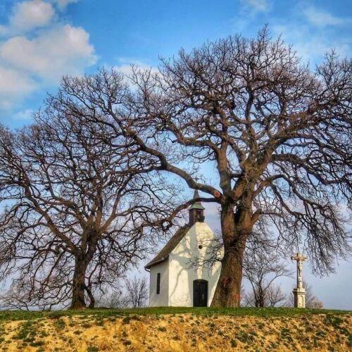 Molyhos Tölgy Ország Fája | Bátaszék