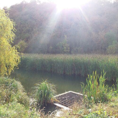 Peca tó | Biatorbágy