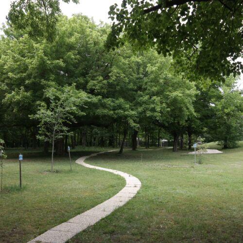 Rákóczi fák sétaútja | Balatonakarattya