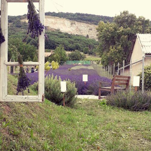 Máriagyűdi Levendulás ház | Siklós