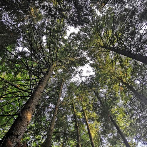 Tuzson Arborétum   Tar