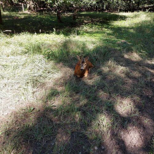 Somoskői vadaspark | Salgótarján