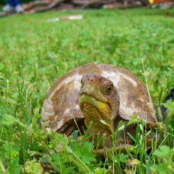 Teknős Park | Kőröshegy