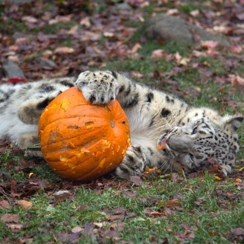Halloween a Szegedi Állatkertben | Szeged
