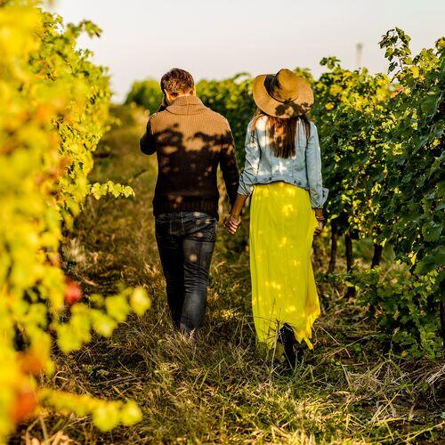 Naplemente túra és borkóstoló a ház borászával - Szedmák Borház | Tarcal