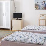 Apartament la etaj cu aer conditionat cu 1 camera pentru 2 pers. (se poate solicita pat suplimentar)